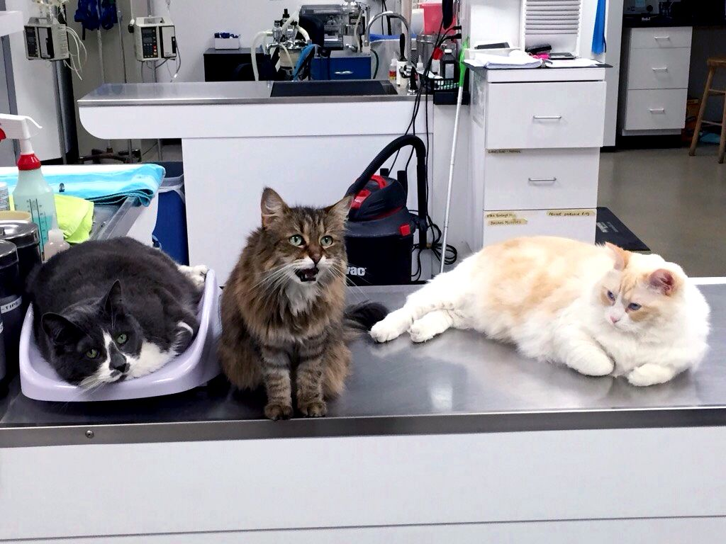 cliniccats
